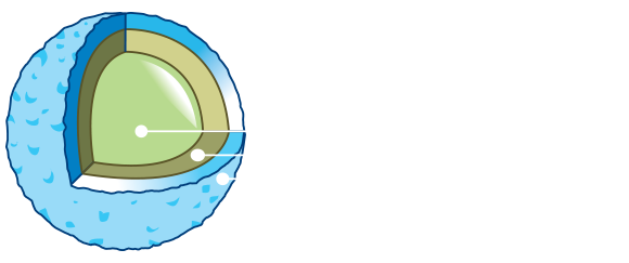 MSM Pet Food-crocchetta-pro-ENG